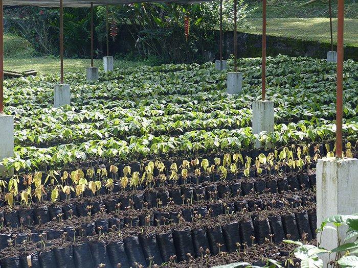 retrouver-diversite-2-plants