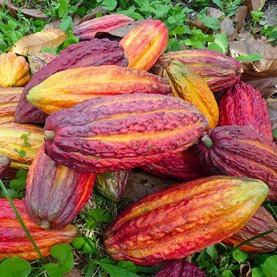 cabosses-chocolat-artisanal-marseille