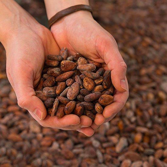 feves-de-cacao-la-baleine-a-cabosse-accueil